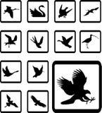 Imposti le icone - 27B. Uccelli Fotografia Stock Libera da Diritti