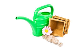 Imposti per i semenzali crescenti. immagine stock libera da diritti