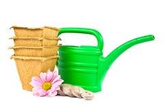 Imposti per i semenzali crescenti. immagini stock libere da diritti