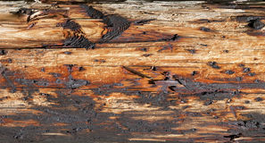 Impregnated wood - RAW format royalty free stock photography