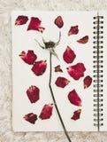 A imprensa secou as pétalas cor-de-rosa da flor na página do caderno, na pele branca do tapete imagens de stock royalty free