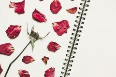 A imprensa secou as pétalas cor-de-rosa da flor, na página do livro de nota, com espaço da cópia, tom do vintage Fotografia de Stock Royalty Free