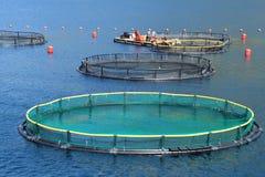 Impresa di piscicoltura Fotografia Stock Libera da Diritti