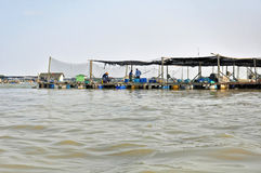 Impresa di piscicoltura in Asia Fotografia Stock Libera da Diritti