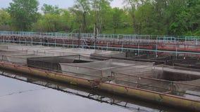 Impresa di piscicoltura dell'attricetta su un fiume dell'acqua dolce video d archivio