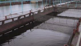 Impresa di piscicoltura dell'attricetta su un fiume dell'acqua dolce stock footage