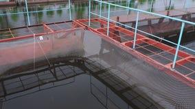 Impresa di piscicoltura dello storione del pontone su un fiume dell'acqua dolce video d archivio