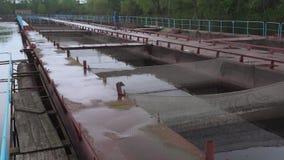 Impresa di piscicoltura dello storione del pontone su un fiume dell'acqua dolce archivi video
