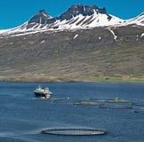Impresa di piscicoltura di color salmone di acquacoltura Fotografia Stock