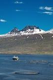 Impresa di piscicoltura di color salmone di acquacoltura Fotografie Stock