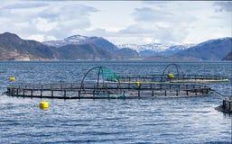 Impresa di piscicoltura di color salmone norvegese Immagini Stock Libere da Diritti