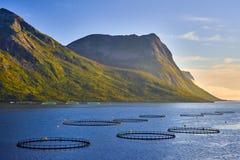 Impresa di piscicoltura di color salmone in Norvegia del Nord Fotografie Stock