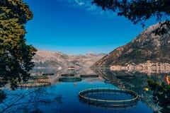 Impresa di piscicoltura nel Montenegro L'azienda agricola per crescere e l'impresa di piscicoltura Fotografie Stock