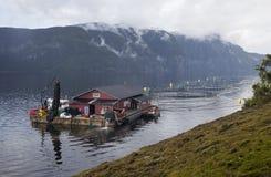Impresa di piscicoltura norvegese Fotografia Stock