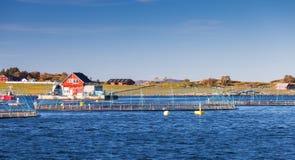 Impresa di piscicoltura norvegese, crescente di color salmone in natura Fotografia Stock
