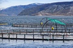 Impresa di piscicoltura norvegese per la crescita di color salmone Immagini Stock Libere da Diritti