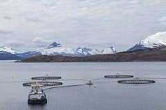 Impresa di piscicoltura in Norvegia Immagini Stock Libere da Diritti