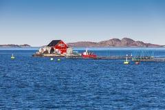 Impresa di piscicoltura per la crescita di color salmone, Norvegia Immagine Stock