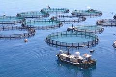 Impresa di piscicolture Fotografia Stock Libera da Diritti