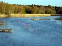 Imprese di piscicoltura su theRiver Fotografie Stock