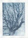 Impresión azul del árbol Fotos de archivo libres de regalías