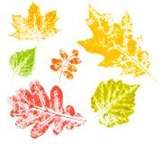 Impresión coloreada de las hojas de otoño aisladas Imagen de archivo libre de regalías