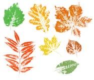 Impresión coloreada de las hojas de otoño aisladas Foto de archivo libre de regalías