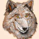 Impresión de la camiseta de la moda con el lobo dibujado vector Foto de archivo