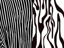 Impresión de la cebra Imagen de archivo libre de regalías