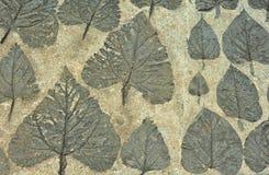 Impresión de la hoja en piedra Imagen de archivo