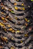 Impresión de la huella del neumático en el camino forestal Fotografía de archivo libre de regalías