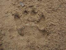 Impresión de la pata de la hiena fotos de archivo libres de regalías