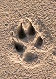 Impresión de la pata de los perros Fotos de archivo