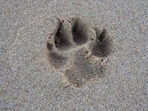 Impresión de la pata del perro en la arena Imágenes de archivo libres de regalías