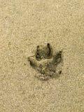 Impresión de la pata del perro en la arena Imagenes de archivo