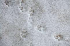 Impresión de la pata del perro en la nieve Rastros de los pies del perro en la nieve Rastros de animales en nieve - imagen imagenes de archivo