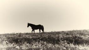 Impresión del albumen - silueta del caballo contra el cielo fotos de archivo