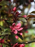 Impresión del jardín de la primavera Imagenes de archivo