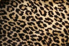 Impresión del leopardo Foto de archivo libre de regalías