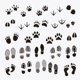 Impresión del pie de animales Foto de archivo