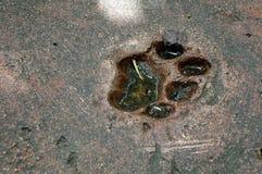 Impresión del pie de la pata Fotografía de archivo libre de regalías