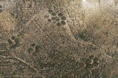 Impresión del pie del perro foto de archivo