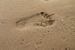 Impresión en la arena Fotos de archivo libres de regalías