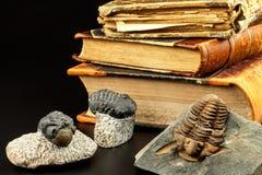 Impresión fósil del trilobite en el sedimento Una impresión de la historia Trilobite fósil en roca imágenes de archivo libres de regalías