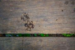 Impresión mojada de la pata del perro en el puente de madera Fotografía de archivo libre de regalías