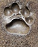 Impresión del pie Imagen de archivo