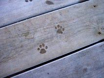 Impresiones 1 del gato Foto de archivo libre de regalías