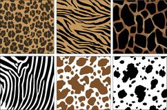 Impresiones animales Imágenes de archivo libres de regalías