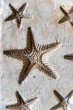 Impresiones de la arcilla de estrellas de mar imágenes de archivo libres de regalías