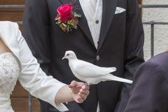 Impresiones de la boda con la paloma blanca Fotos de archivo libres de regalías